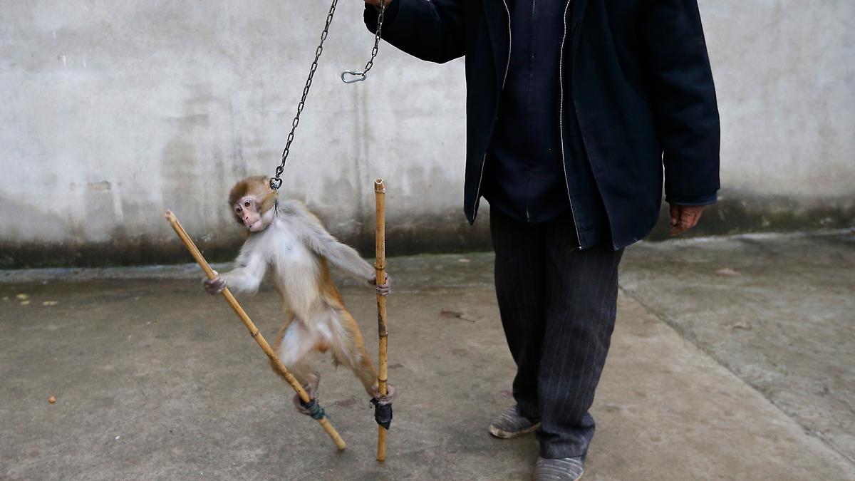 Tierquäler und Tierqualen als Tradition